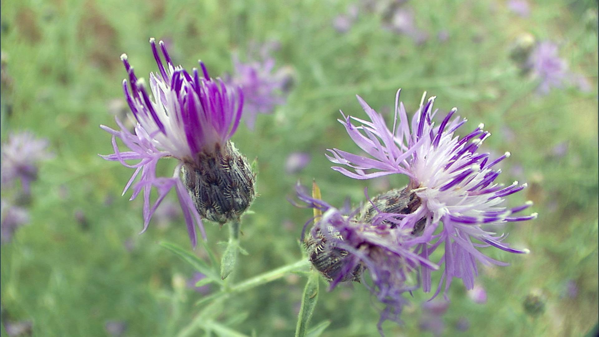 Nature (Season 31) - What Plants Talk About | Press Release ...