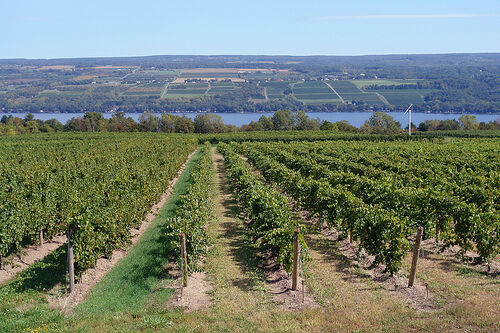 Pour New York?: The Economics of New York State Wines