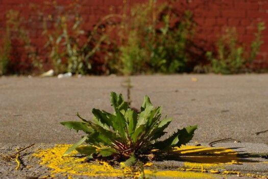 Profiles of Spontaneous Urban Plants