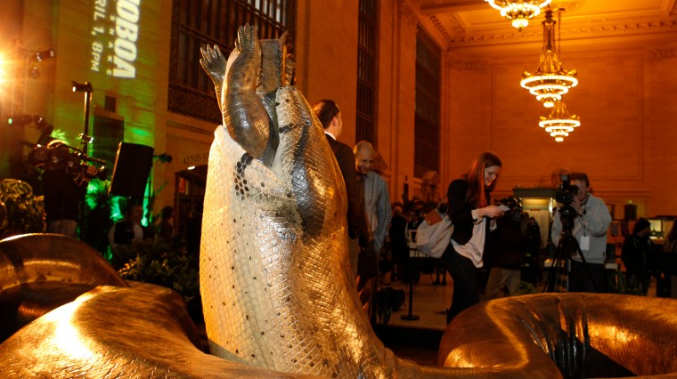 48-Foot Snake on Tour in Grand Central Terminal