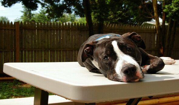 Animal Shelter Touts Progress, Advocates Disagree