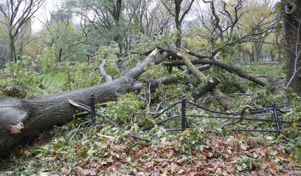 New York Parks Battered by Sandy's Blow