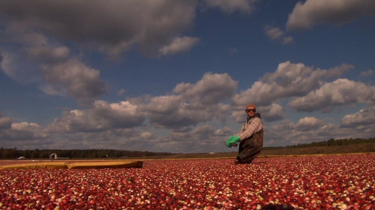 Cranberries Plentiful in New Jersey