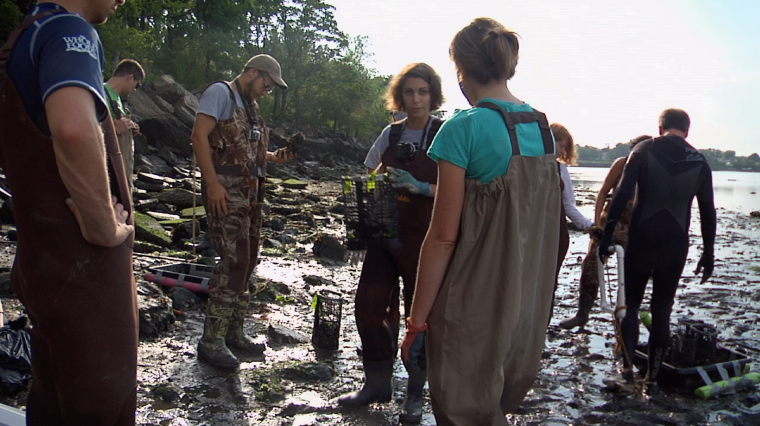 Restoring Oysters to Protect Us From the Next Superstorm Sandy