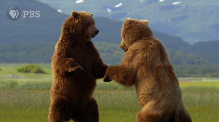 "July 20, 2017: SUMMER OF ADVENTURE:  ""WILD ALASKA LIVE"""