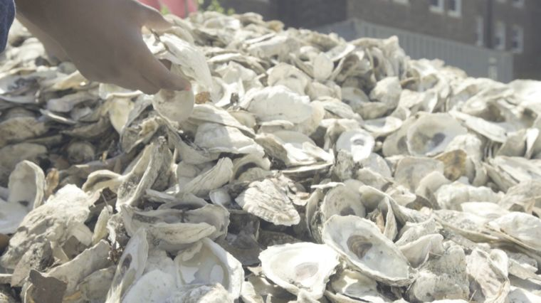 """BILLION OYSTER PROJECT"""