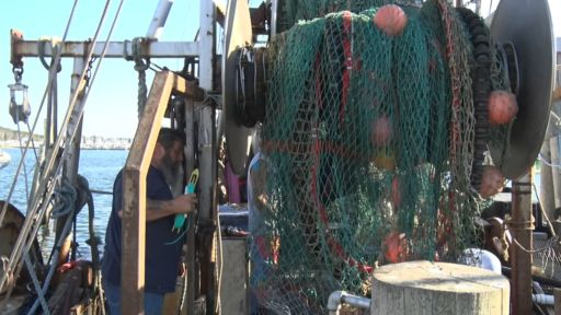 THRIVING OR JUST SURVIVING: LONG ISLAND'S FISHING INDUSTRY