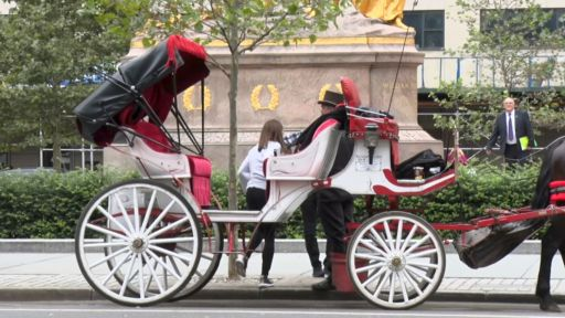 CARRIAGE HORSE HEARING