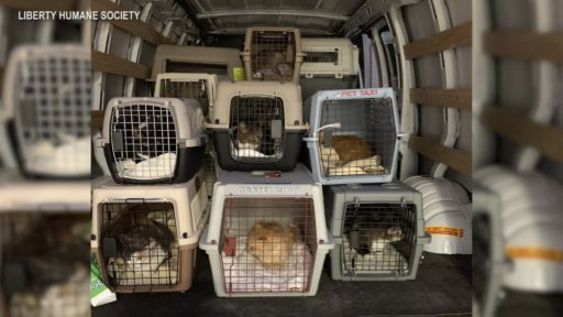 BEST FRIENDS ANIMAL SOCIETY HELPS HOMELESS CATS AND DOGS WEATHER THE STORM