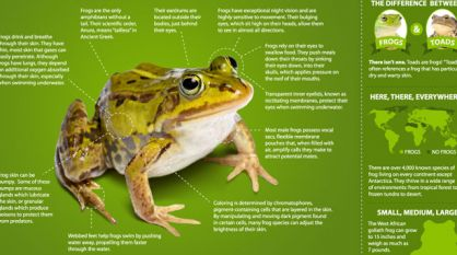 Infographic: All About Frogs