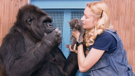 Koko the gorilla and Dr. Penny Patterson in the NATURE documentary A Conversation with Koko.