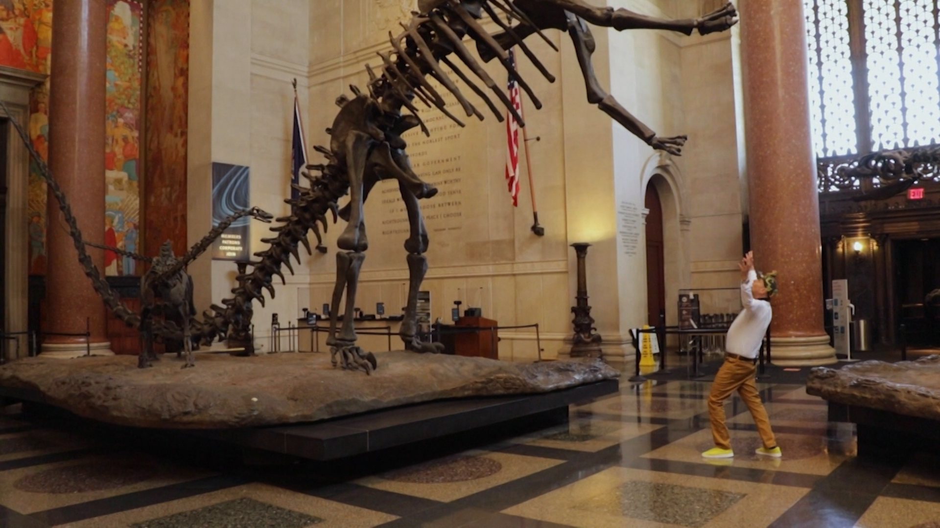 A dinosaur model in bones stands upright in a museum exhibition